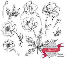 Vector set of graphic spring flowers (trollius)