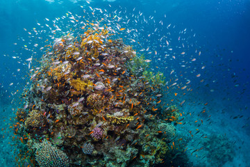 Keuken foto achterwand Koraalriffen Tropical fish