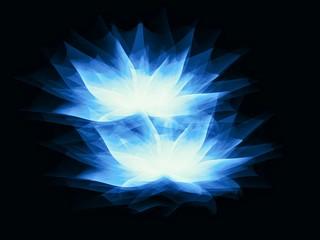 fond d'écran fleur, effet lumière