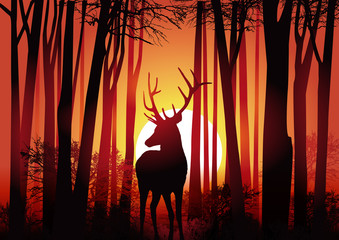 Cerf - Forêt - Chasse - Nature