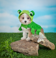 Wall Mural - Frogger Puppy