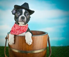 Wall Mural - Cowboy Puppy