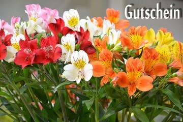Gutscheinkarte mit Blumenmotiv Inkalilien