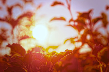 Natural Autumn tree on sky with sun