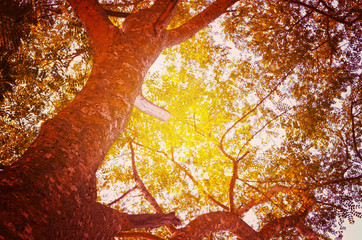 Autumn forest tree with sunset