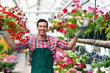 Gärtnerei in einem Gewächshaus für Blumen