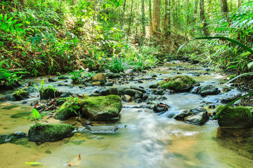 Aluminium Prints Forest river Babbling Brook in Green Forest