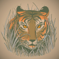 Vector illustration of a tiger's face in jungle grass.