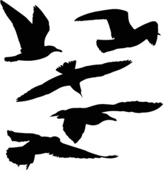 set of five gull black silhouettes