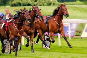 Rennpferd,Jockey,Pferd,Pferderennen,