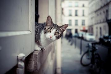 chat curieux fenêtre ville