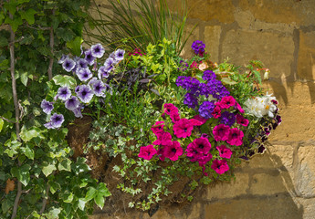 Colorful plants in wall mounted wrought iron basket  including b