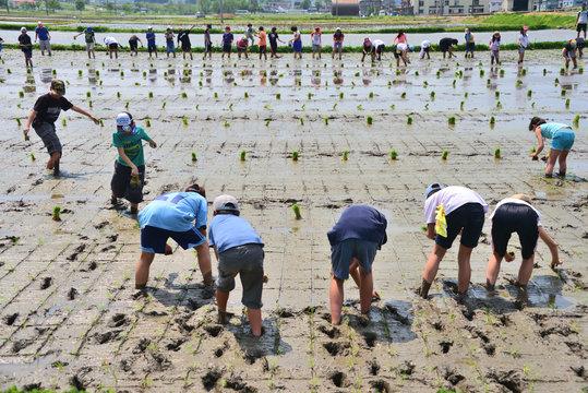 農業体験「田植え」