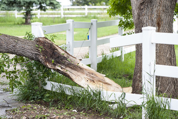 Damaged tree wreckage caused from tornado in Larimer Country, Colorado.