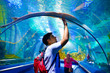 young man, tourist touching the glass under cramp-fish, while visiting marine underwater tunnel