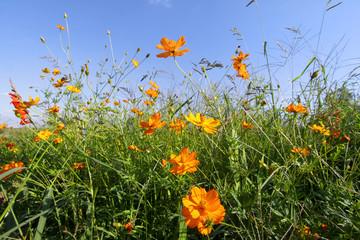 Flower plants in the garden against blue sky