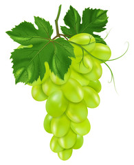 Green grapes on a vine with leaves.