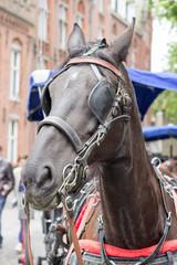 Pferdekopf Pferd mit Scheuklappen