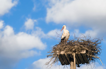 White Stork (Ciconia ciconia) standing on nest against blue sky and white clouds