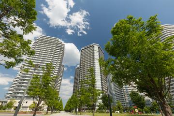 Fototapete - 新緑の高層マンション