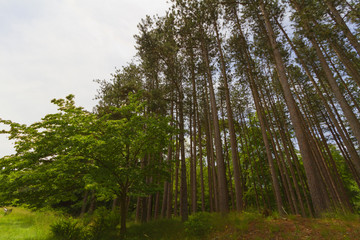 Tree landscape.