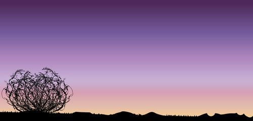 Tumbleweed Sunset