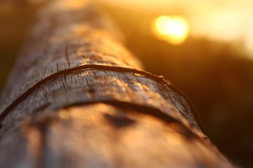 Le formiche continuano strenuamente il loro lavoro al calare del sole, noncuranti della meraviglia che esplode alle loro spalle.
