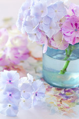 beautiful hydrangea flowers  close-up in a vase