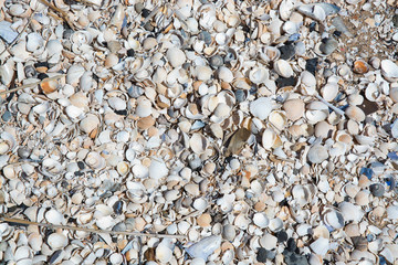 Seashells background with various seashells on beach in Falkenberg, Sweden.