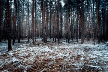landscape of dark forest covered by snow