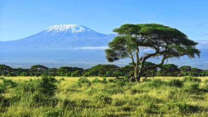 Canvas Prints Africa Mount Kilimanjaro