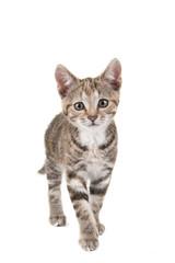 Self adhesive Wall Murals Cat Cypers kitten, jonge kat, komt naar de camera gelopen, tegen een witte achtergrond