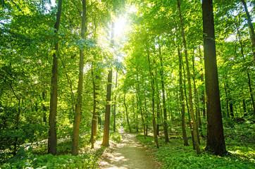 Einladung zum Träumen und Entspannen: Wald mit Morgensonne :)