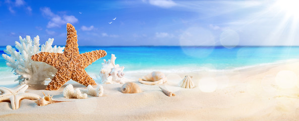 Wall Mural - seashells on seashore in tropical beach - summer holiday background