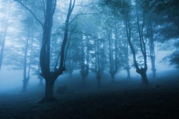 dark forest with dense fog
