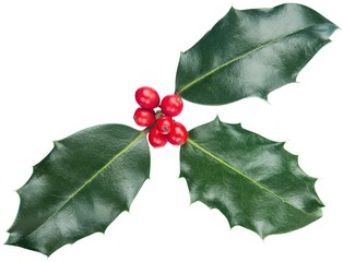 Christmas, Holly, Leaf.