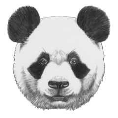 Original drawing of Panda. Isolated on white background