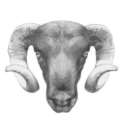 Original drawing of Ram. Isolated on white background
