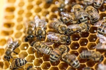 Bee, Honeycomb, Beehive.