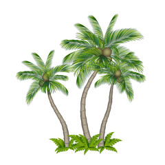 Palm tree colored isolated on white