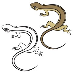 Illustration of little lizard. Coloring book. Vector