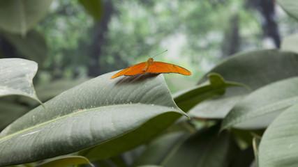 Farfalla tropicale su foglia