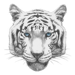 Original drawing of Tiger. Isolated on white background