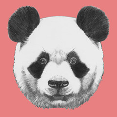Hand drawn portrait of Panda. Vector isolated elements.