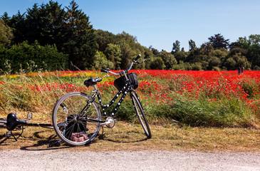 Vélo & Coquelicot