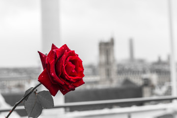 Red rose over Paris background from the terrace of Centre Pompidou