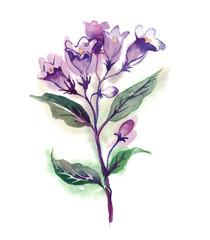 Weigelas Flower