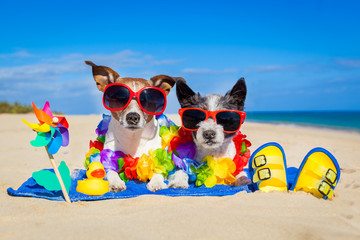 couple of dogs on vacation