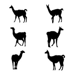 Collection of guanaco' silhouettes