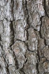 松の幹模様